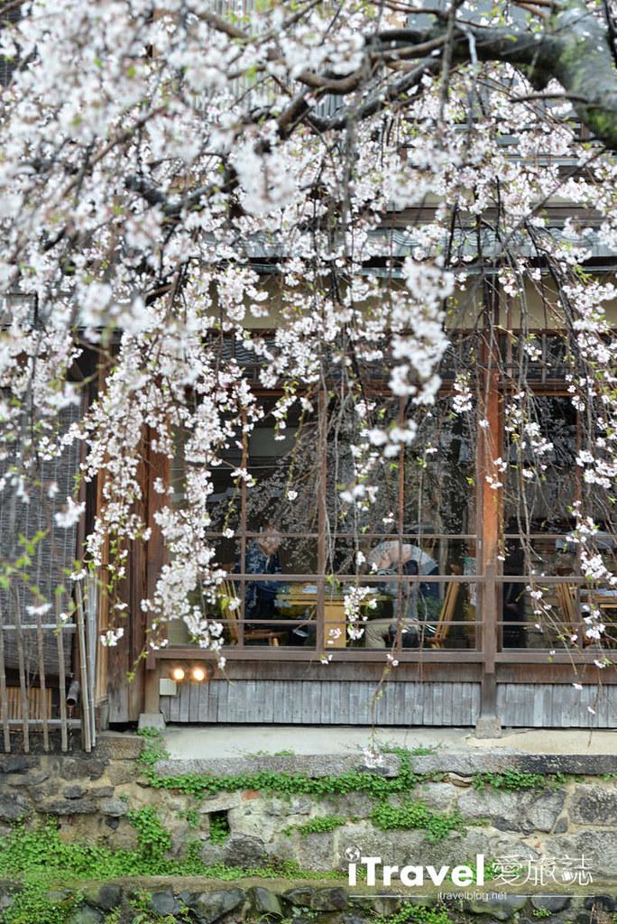 《京都赏樱景点》二访祇园白川赏吉野樱花盛开,顺游行程心得分享
