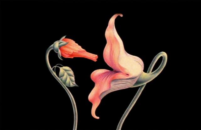 Juego sexual entre flores