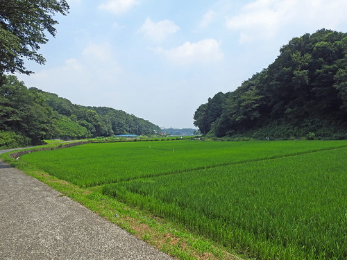 Rice field of Jike Hometown Village(Yokohama, Japan)