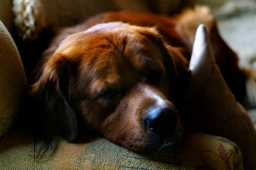 Living With Pets: Top Tips On How To Keep Your Home Tidy