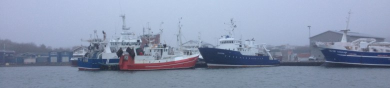 fiskebäck_juldagen_2016_ - 53