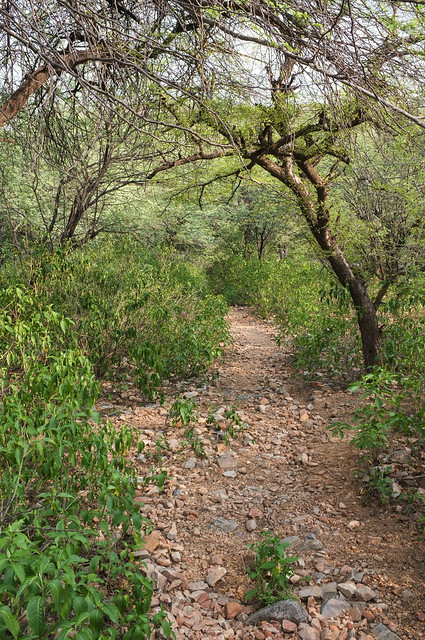 Woody Path