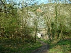 Nightingale Valley