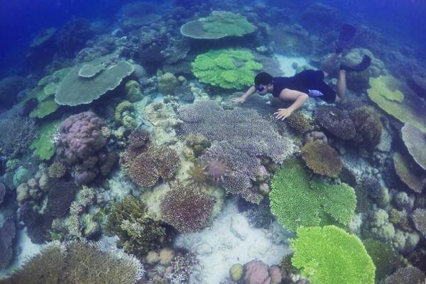 Diving Labengki 1