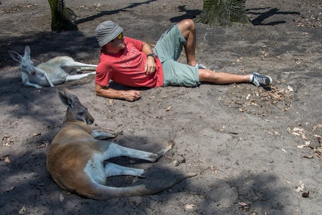 Chillin' with the Roos!