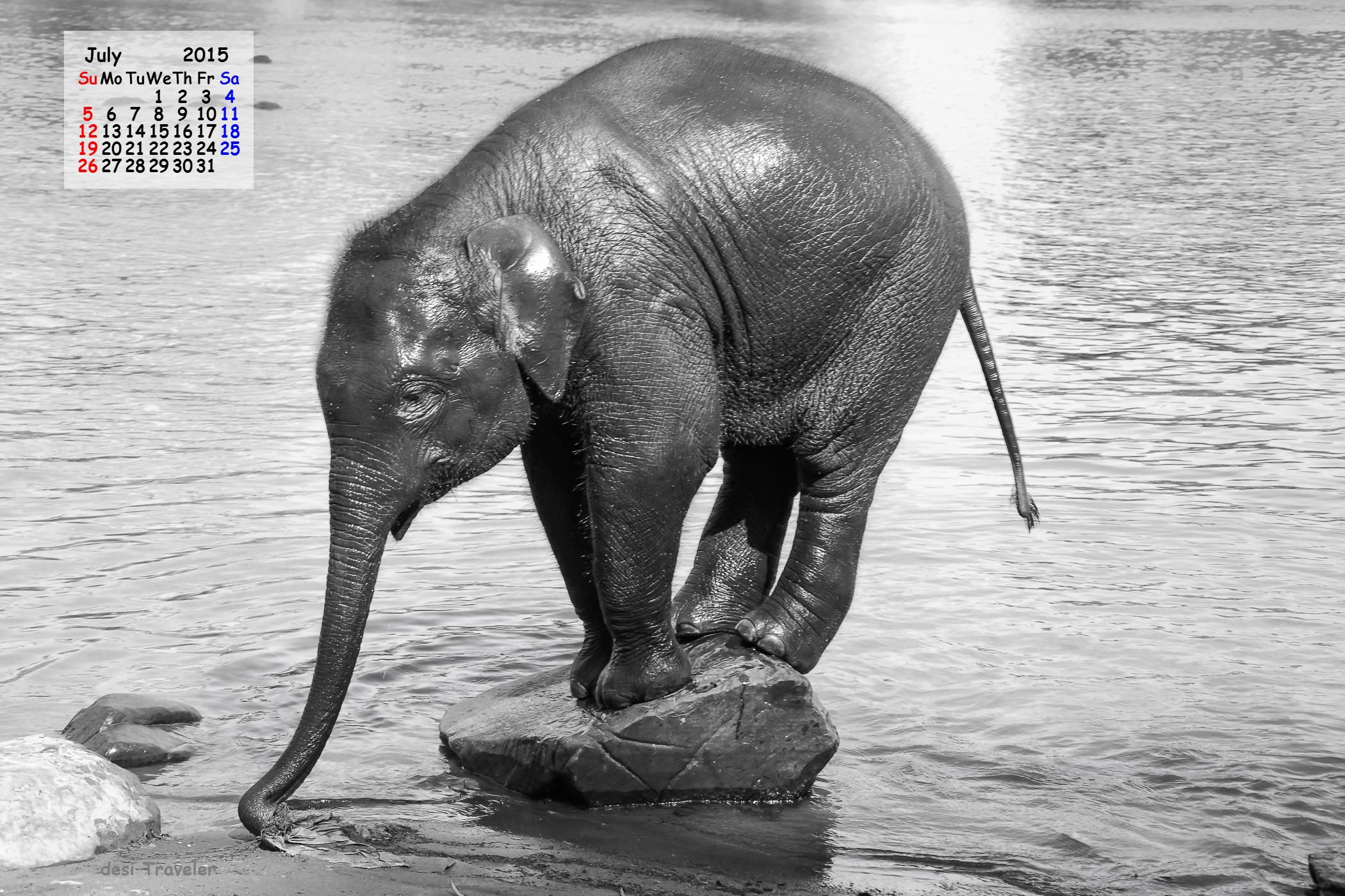 Calendar Wallpaper July 2015 : July calendar desktop download with baby elephant