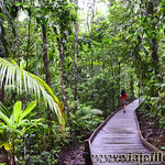 10 Viajefilos en Australia, Cape Tribulation 005