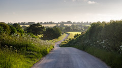 Country lane in #Dorset