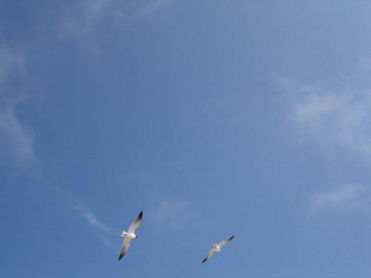 Seagulls, Ocean Springs MS
