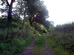 Antioch woods