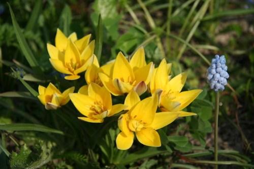 Encuentros florales