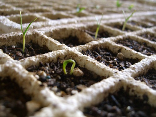 Tiny seedlings