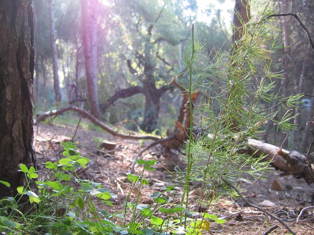 foto de una zona boscosa