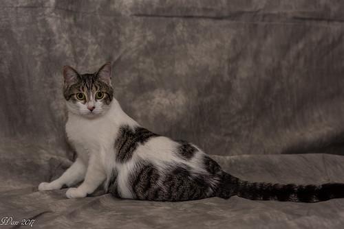 Cat Marble