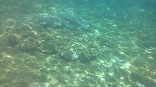 Chama, chamo y tortuga en la isla de APO