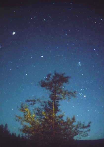 Tree / Pleiades / Hyades