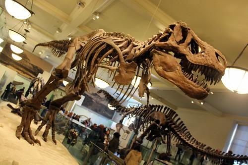 NYC - AMNH: Hall of Saurischian Dinosaurs - Tyrannosaurus Rex