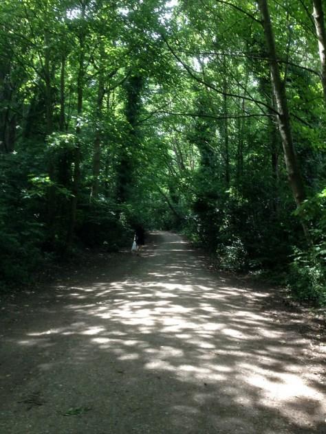 Parkland Walk, London
