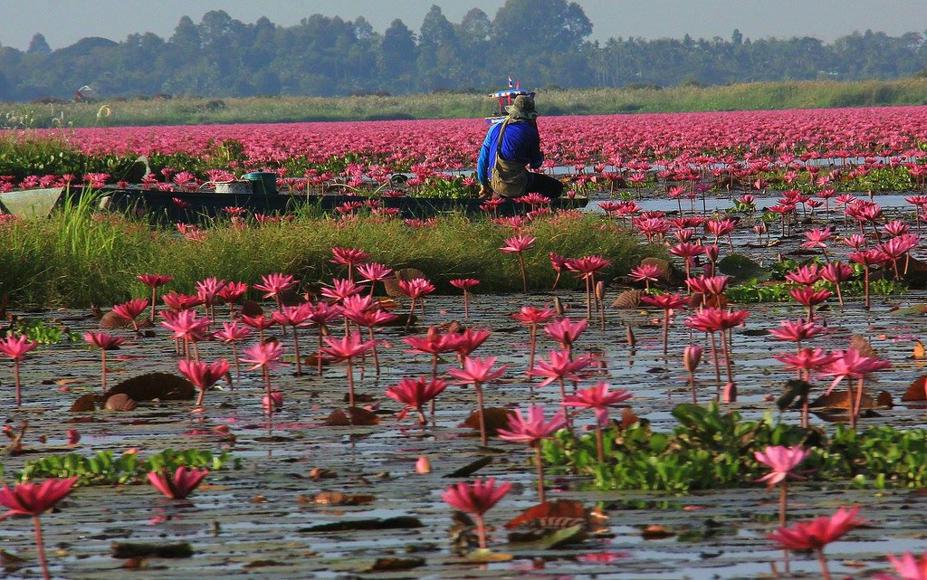 Locals get benefit from tourism at Red Lotus Sea