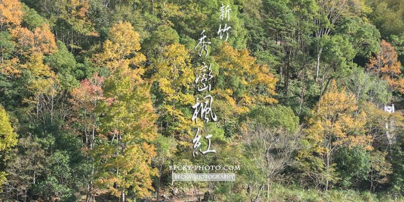 【新竹】。楓葉拍攝景點『尖石鄉秀巒楓紅』- 派出所雲海 #軍艦岩吊橋 #控溪吊橋