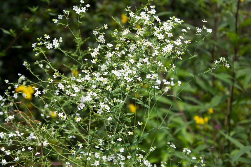 mt-cuba-gardens-delaware-white-flowers-delicate