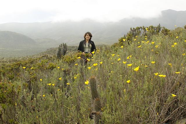 Anita & Amancay - Desierto Florido
