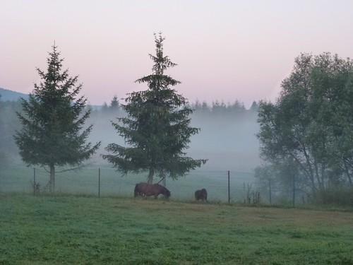 Poranek w Dźwiniaczu by Polek