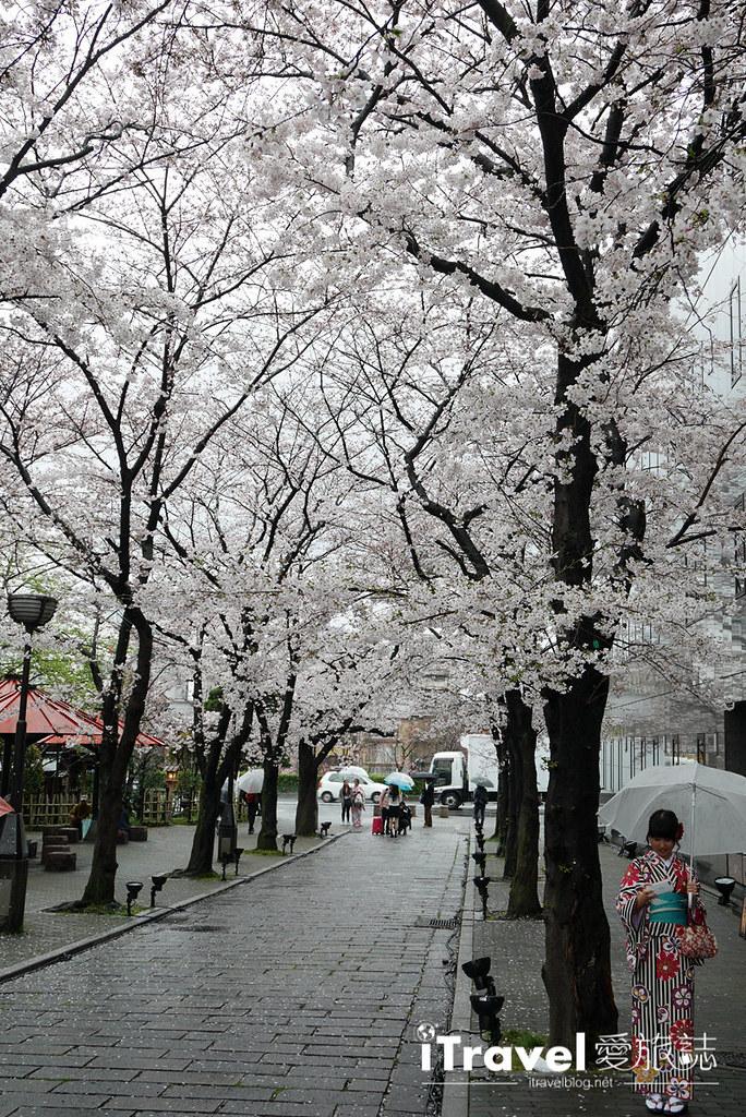 京都赏樱景点 祇园白川 (16)