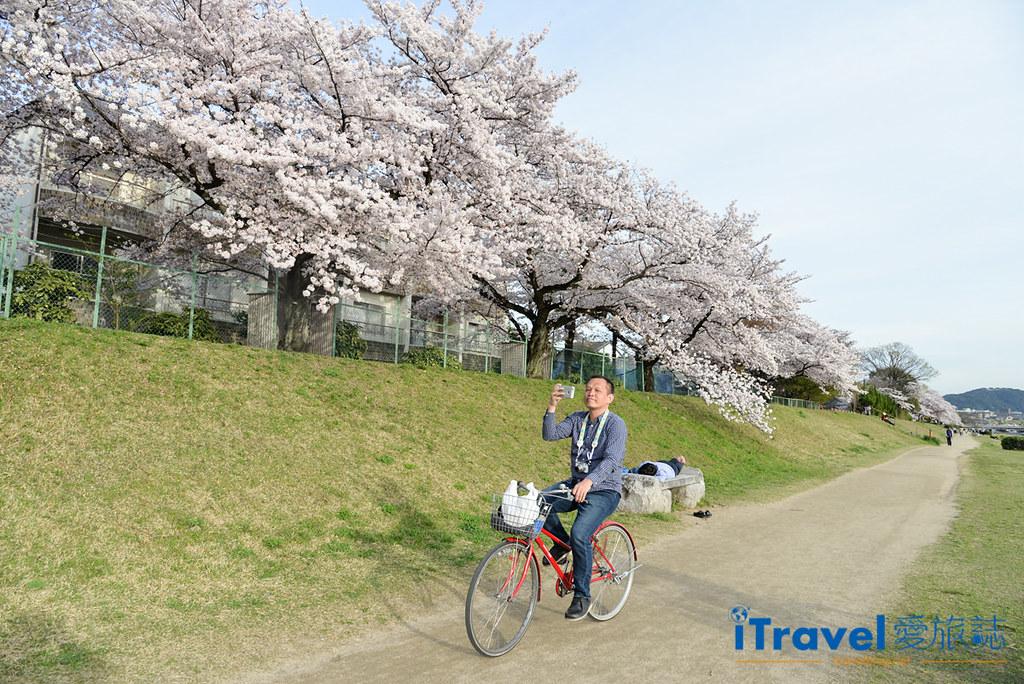 《京都租脚踏车实录》Rent a cycle EMUSICA 平价实惠车行,轻松骑乘玩赏鸭川樱花