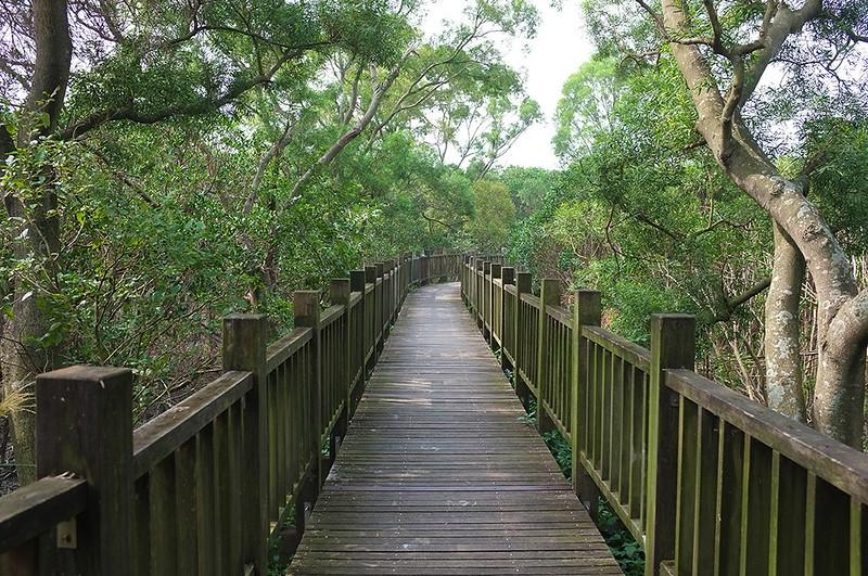紅樹林自然步道DSCF6056