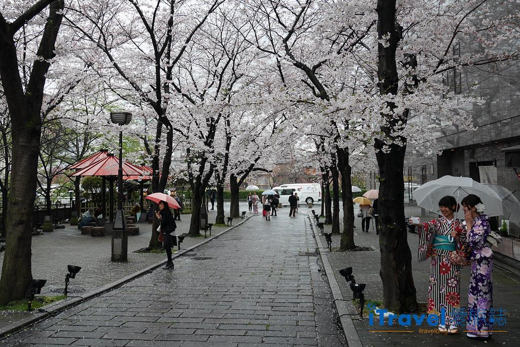 京都赏樱景点 祇园白川 (0)