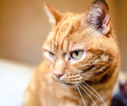 cats eye x100t