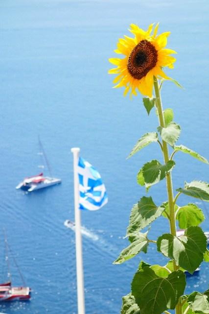 エーゲ海と向日葵