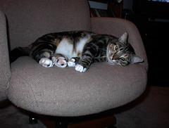 Sleepy Z in Koz chair