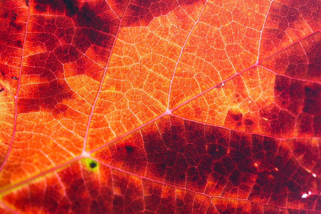 Imagen gratis de una hoja en otoño