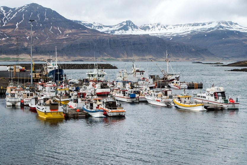 Some of the fishing boats in Höfn.