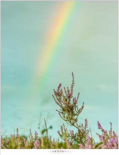 De foto waar het mij om ging: heide met de regenboog. Door gebruik van het tele objectief duidelijk op opvallend. (140mm - f/8)