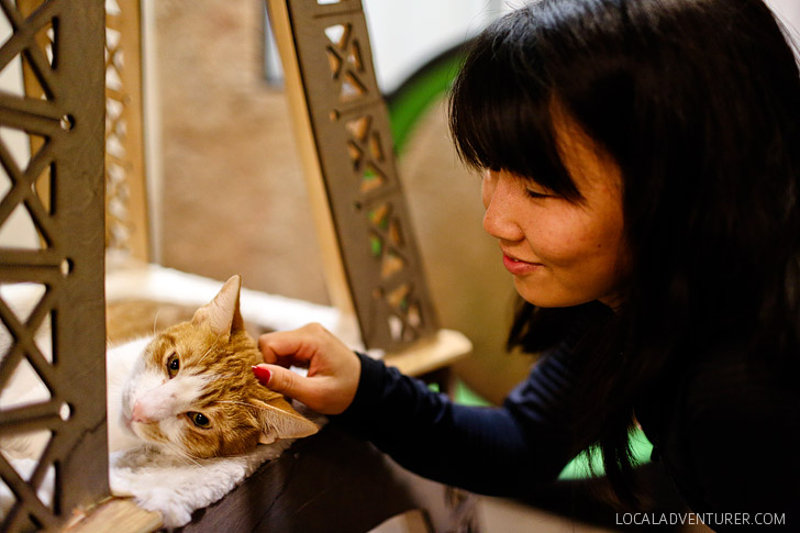 San Diego Cat Cafe in the Gaslamp District.