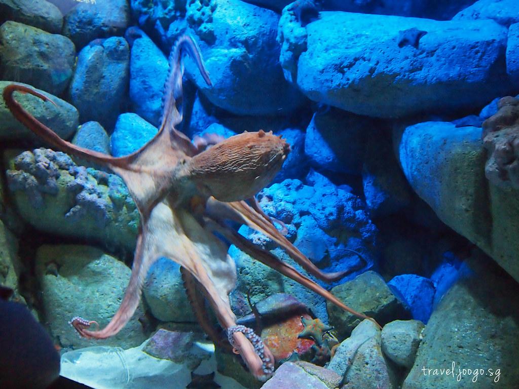 travel.joogo.sg - SEA Aquarium 14