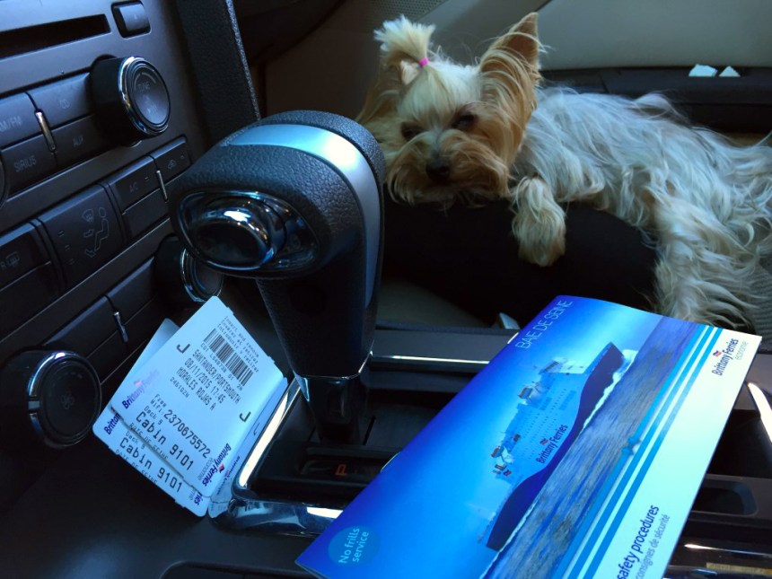 Pau antes de embarcar con destino a Inglaterra Viajar con mascotas a Reino Unido desde España Viajar con mascotas a Reino Unido desde España 23576944451 824897498c b