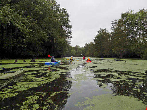 Sparkleberry Swamp 2015