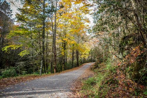 Fall Leaves-27