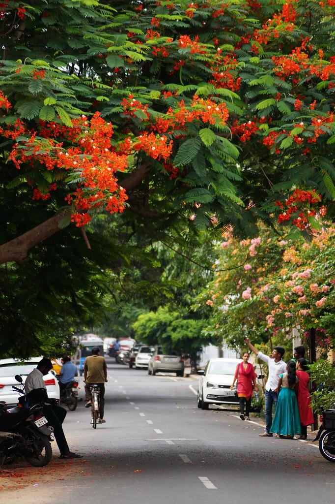 Indien India Pondicherry Puducherry Blog (32)