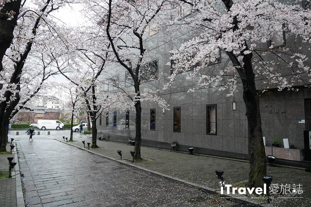 京都赏樱景点 祇园白川 (11)