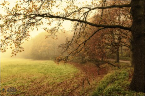 Almost lost autumn