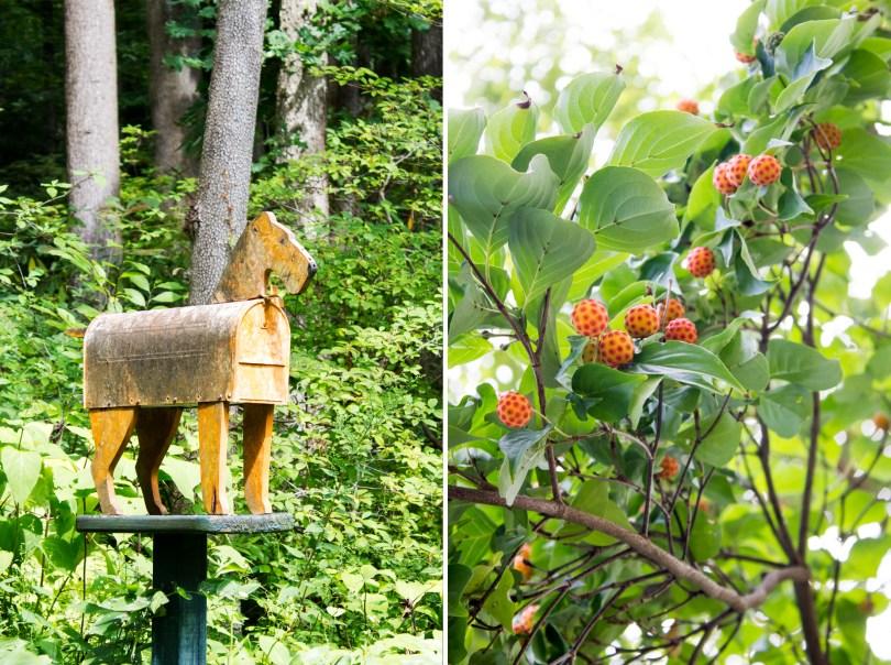 mt-cuba-gardens-delaware-mailbox-berries
