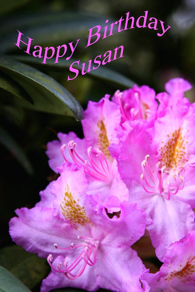 Happy Birthday Susan Happy Birthday