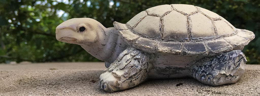 Just a random turtle