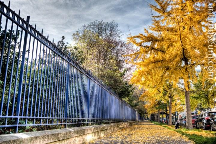 Montsouris - Paris - Avenue Reille - France - Autumn - Fall