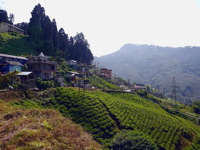 Colorful houses overlook the tea fields